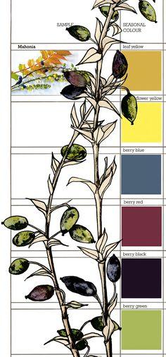 Planet Sam: Colour from the season - Mahonia yellow