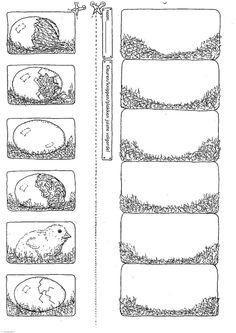 logische volgorde kuiken uit het ei