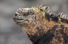 Galápagos wildlife di richard duerksen
