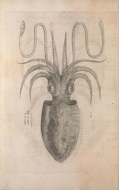 Aquatilium animalium historiae, liber primus : - Biodiversity Heritage Library