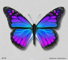 Viceroy Monarch Butterfly Painted Wings Purple-Blues, Bright & Vivid on Gallery Quality Canvas Art, options: peace love and butterflies .comViceroy Monarch Butterfly Painted Wings Purple-Blues, Bright & Vivid on Gallery Quality Canvas Art, Purple Butterfly, Monarch Butterfly, Blue Butterfly, Butterfly Wings, Cartoon Butterfly, Butterfly Painting, Butterfly Wallpaper, Butterfly Canvas, Butterfly Frame