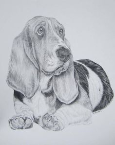 Basset Hound- Pencil by xx-ashley Dog Pencil Drawing, Pencil Drawings, Art Drawings, Pencil Sketching, Drawing Faces, Realistic Drawings, Animal Sketches, Animal Drawings, Tatoo Dog