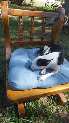 Unique Pet Bed Chair  Reclaimed Dog Bed by TheRecycledGreenRose, $106.00 #PetBed #DogBed #CatBed #AnimalBed #Upcycled #Repurposed #Handcrafted #Handmade #Dog #Doggie #Doggy #Dogs #Cat #Cats #Kittens #Bed #Animal #OOAK #Interesting #Reclaimed  #Etsy #Shop #Sale #Sales #Coupon #Coupons #CouponsAvailable #CouponAvailable #OnlineShopswithSales #OnlineShop #OnlineShopping #OnlineShoppingSales