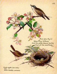 vintage bird print White Throats nest with eggs Crab apple flowers botanical watercolor bird decor