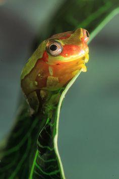 I think he swallowed a lightning bug.  (photo by Beth Keplinger, via Flickr)