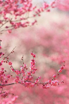 FREEIOS7 | spring-in-pink - parallax iphone wallpaper - more at FREEIOS7.com