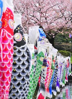 Koinobori (Streaming Carp Frag), Children's Day(Kodomonohi), May 5th, Japan