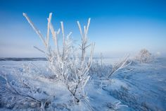 Hoar Frost and Rime Ice