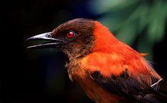 10 Gambar 10 Jenis Burung Unik Dengan Sistem Pertahanan Terbaik Terbaik Burung Jenis Pertahanan