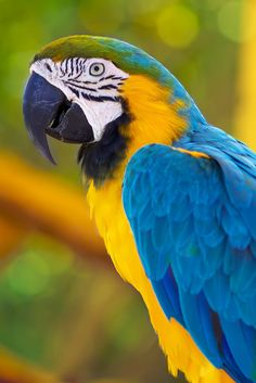 Macaw...I have always wanted one of these beautiful birds. Maybe one day.
