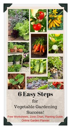 1000 images about vegetable garden tips organic on for Organic vegetable garden design