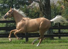 Was arguably the fastest racehorse of She and Black Annis will always be neck in neck in the fastest 2015 category. Thoroughbred Horse, Friesian Horse, Palomino, Andalusian Horse, Arabian Horses, Beautiful Horse Pictures, Beautiful Horses, Horse Color Chart, Horse Therapy