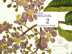 La Belle Dame Perfume Box Wrap Crow Water + Parfum