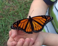 All-A-Flutter Butterfly Farm | Greensboro, NC Travel & Tourism - Greensboro, NC Accommodations, Restaurants, Events & Attractions