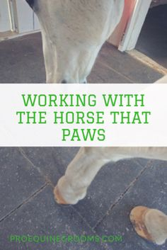 Pro Equine Grooms - Pawing Behaviors http://www.proequinegrooms.com/blog/guest-blogs/working-with-the-horse-that-paws/