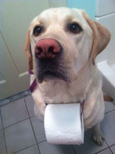 Toilet paper helper.