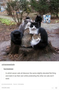 19 Hilarious Tumblr Posts About Cats That Are Way Too Funny To Miss