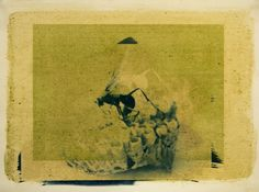 Brioch, Anthotype and Cyanotype, 2014