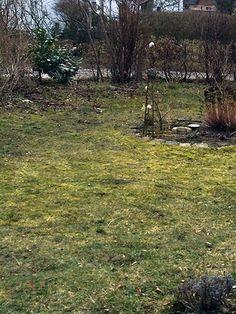 Sie möchten Ihren Rasen entfernen, weil er unansehnlich geworden ist? Wir zeigen Ihnen, mit welchen Hilfsmitteln Sie am besten voran kommen.
