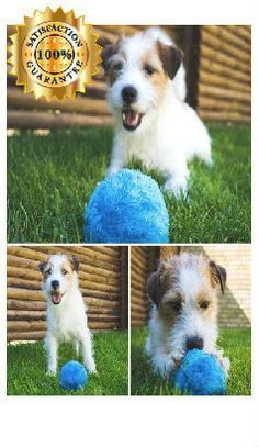 Did You See This? An Interactive Ball! It Keeps Your Dog