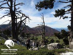 Questi luoghi ti aspettano... Pollino National Park
