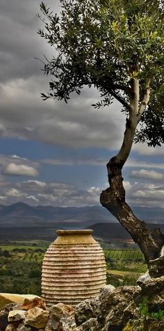 Jar & olive tree Greece. ☆ Δοχείο και δέντρο ελιάς.