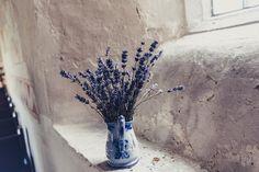 blue flowers in vase on window sill Best Indoor Plants, Cool Plants, Lavender Oil For Sleep, Colorful Desk, Modern Led Ceiling Lights, Oils For Sleep, Essential Oil Candles, Essential Oils, Planting Vegetables