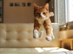 flying cat12
