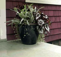Designing Containers for Shade: 360-Degree View | Fine Gardening