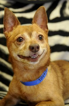 This is one of the dogs up for adoption. He looks like he's taking an awkward elementary school photo.