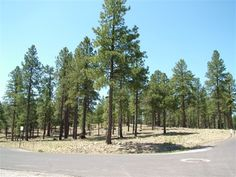 Home Site 175 | 2333 E. Del Rae Drive | 20,330 acres | 0.47 acres | Offered at $240,000