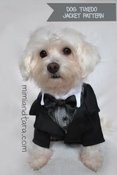 HEY EVERYONE FREE DOG CLOTHING PATTERN PDF'S AT TARA AND MIMI'S! This site is so darn cute. You could use these patterns to make cat clothing as well, (which I plan on doing. Sorry Mr. Bear.) dog tuxedo jacket pattern