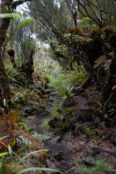 Forêt de Bébour, un sentier de conte fantastique