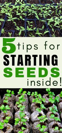 Indoor gardening tips: Get your vegetable garden off to a great start with these seed starting tips! Vegetable Gardening | Organic Gardening | Garden Tips