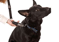 PatentoPet DOG-e-Walk Premium Dog Trainer Black ** Awesome dog product. Click the image : Leashes for dogs