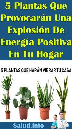 5 #Plantas Que #Provocarán Una #Explosión De #Energía #Positiva En Tu #Hogar #salud #vida #bienestar #remedios #conocer #consejos Getting To Know, Wellness, Remedies, Tips, Plants, Health, Home, Life