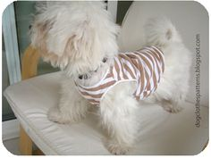 Free Dog Clothes Patterns: Dog T Shirt Pattern