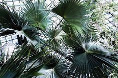 noa-noir-art-berlin-botanic-garden-cactus-tropical-green-botanischer-garten