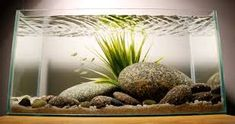 Image result for fish tank pebble gravel