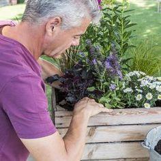 Diese alte Obstkiste wird zum Mini-Beet umfunktioniert und beweist: Es muss nicht immer der klassische Kübel sein, um Pflanzen stilvoll zu präsentieren. Eine ausgediente Holzkiste zu bepflanzen, kostet nicht viel und sie versprüht zudem noch ländlichen Charme.