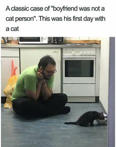 Wholesome Animal Memes To Start The Week Off Right - Stupid Ass Shit That Shouldn't Make Me Laugh But Rustles My Jimmies Errytime - Kitty kit Cute Funny Animals, Funny Animal Pictures, Cute Baby Animals, Cute Cats, Funny Cats, Cats Humor, Funny Horses, Adorable Kittens, Crazy Cat Lady