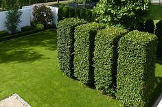 Die 16 Besten Bilder Von Garten Heckenpflanzen Hedges Gardens Und