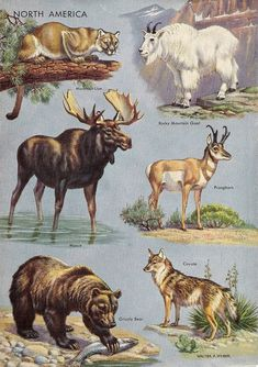 Funny Animal Photos, Funny Animals, Cute Animals, Hunting Drawings, North American Animals, Creature Concept Art, Unusual Animals, Animal Posters, Animals Of The World