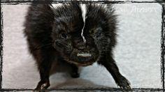 Skunk Soft Mount Taxidermy by LoveBizarreOddities on Etsy