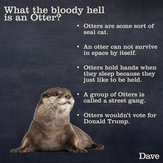 Funny otter post that came up in my FB feed