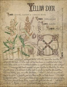 Magic plant knowledge has a long history and has a place in the modern witches Book of Shadows. Book of Shadows page. Magic Herbs, Herbal Magic, Magick Spells, Pagan, Grimoire Book, Witch Herbs, Witchcraft For Beginners, Witch Aesthetic, Practical Magic