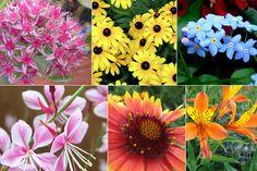 назви деяких квітів португальською
