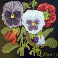 Elizabeth bradley-Pansy