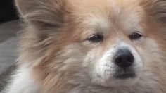 LOIALITATE: Un cățel stă de 3 ani, în același loc, așteptându-și stăpâna… care este foarte bolnavă Dacă povestea câinelui Hachiko, din Japonia, va impresionează de fiecare dată când o auziți, trebuie să știțicăși alți câini sunt dovezi incontestabile ale devotamentului față de oameni. Acest cățel și-a așteptat stăpâna trei ani de zile, în același loc, …