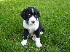 Fotos de cachorros de perro... ¡Qué preciosos son todos! ¿Con cuál te quedas? | Cuidar de tu perro es facilisimo.com